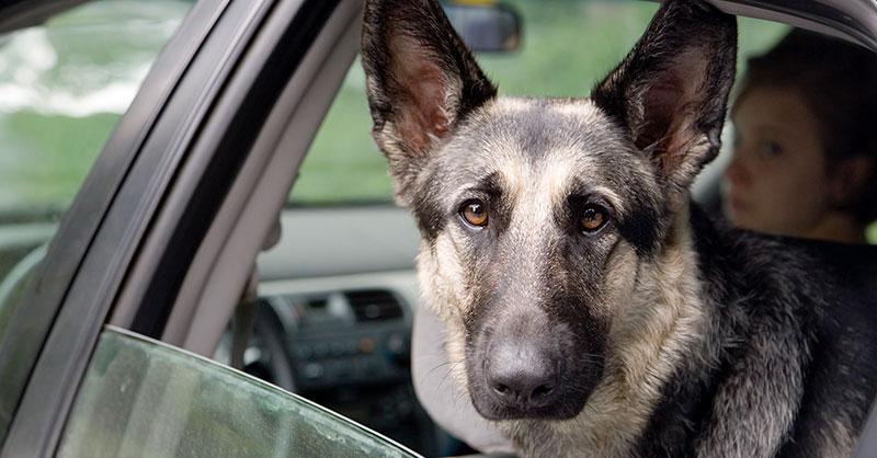 cute_dog_thumb.jpg
