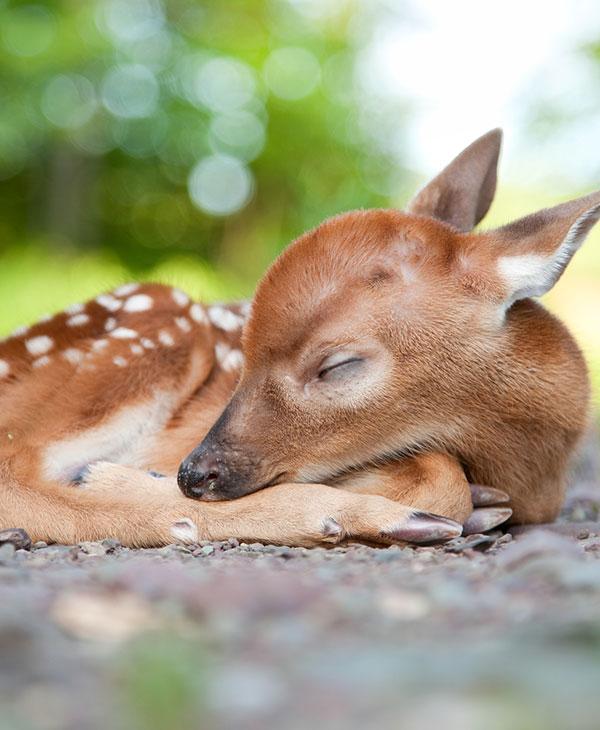 cute_fawnrescue_1.jpg