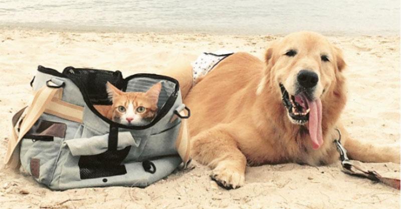 cute_dogkitten_THUMB.jpg