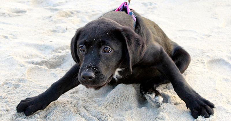 cute_ninjadog_THUMB.jpg