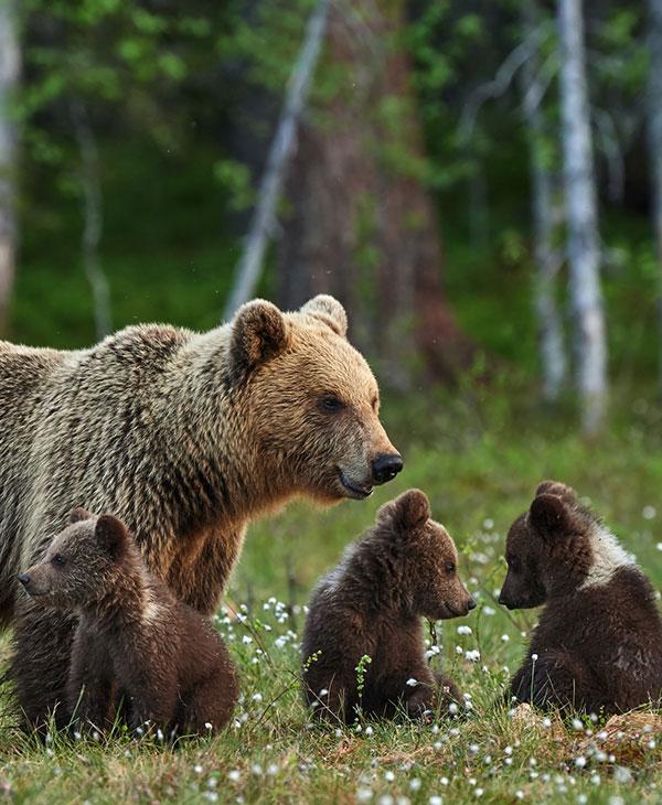 cute_bearcubs_1.jpg