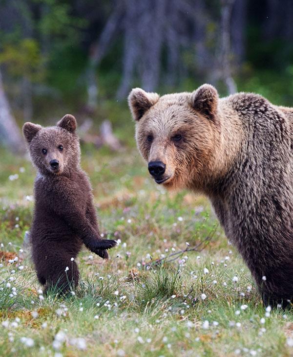 cute_bearcubs_2.jpg