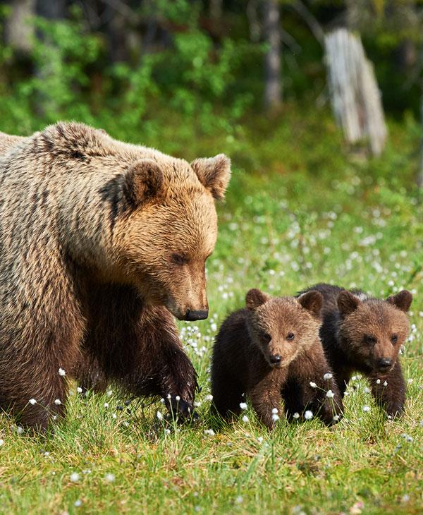 cute_bearcubs_6.jpg