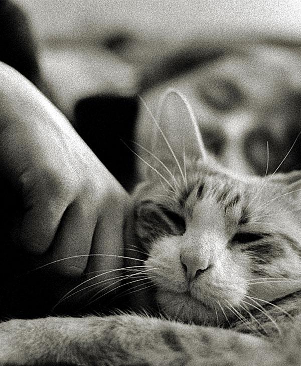 cute_catlvoe.jpg