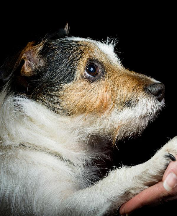 cute_loyaldog_1.jpg