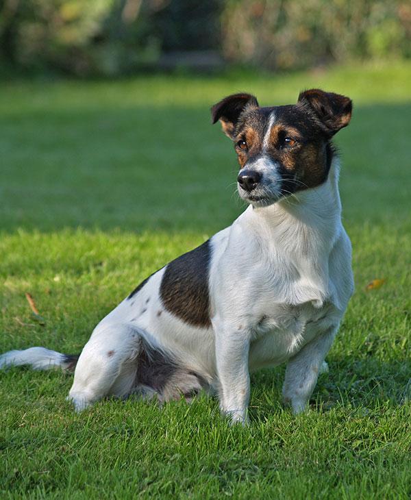cute_loyaldog_3.jpg