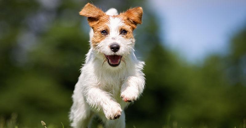 cute_loyaldog_THUMB.jpg