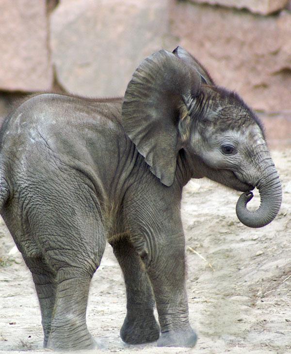 cute_elephantchase_1.jpg