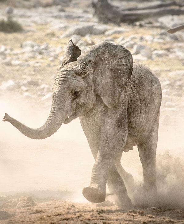 cute_elephantchase_3.jpg