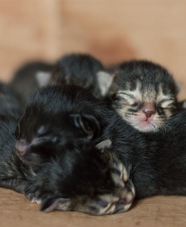 cute_kittenfamily_2.jpg