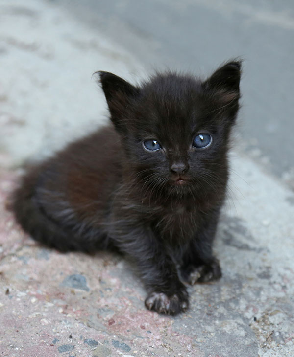 cute_kittenfamily_3.jpg