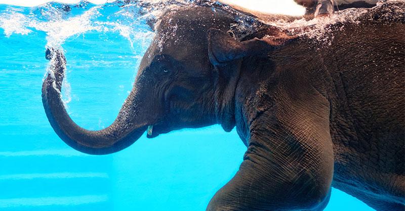 elephantthumb.jpg