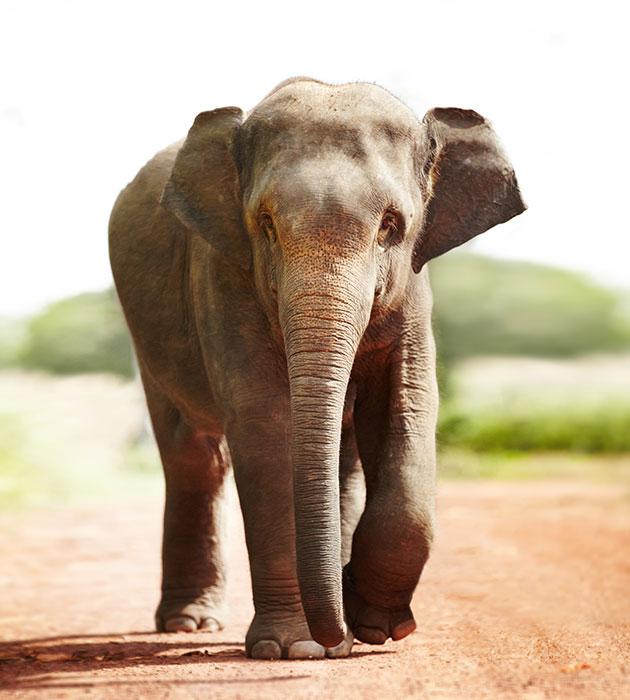 elephant2.jpg