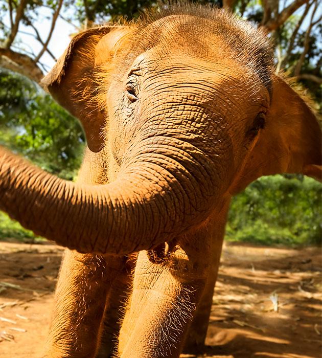 baby-elephant2.jpg