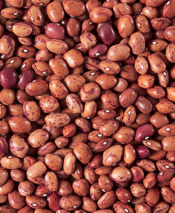 cute-beans2.jpg