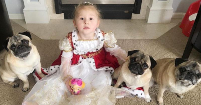 cute-pugs-and-little-girl-THUMB.jpg