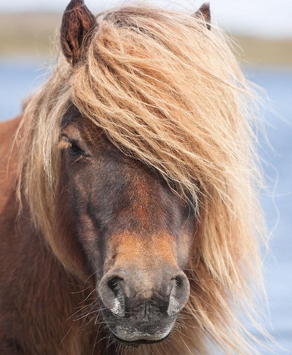 cute-shetland-pony-frontview.jpg