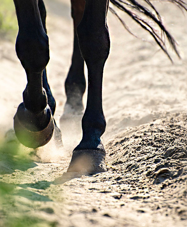 animals-horses-running.jpg