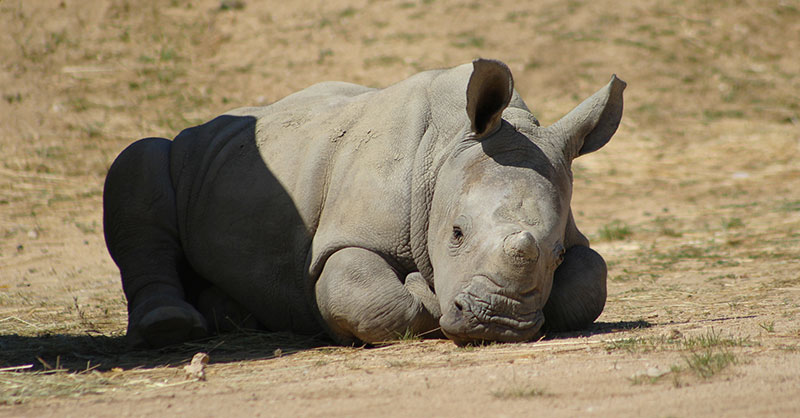 cute-baby-rhino-THUMB.jpg