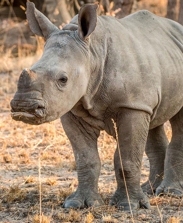 cute-baby-rhino-sideview.jpg