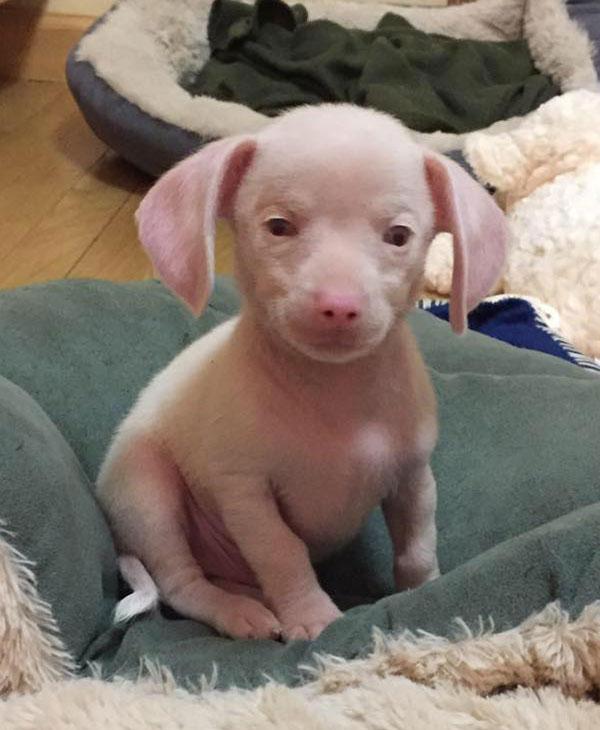 cute-pink-puppy-tiny.jpg