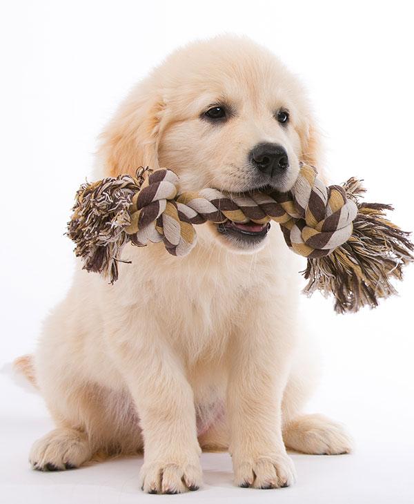 cute-puppy-toy.jpg