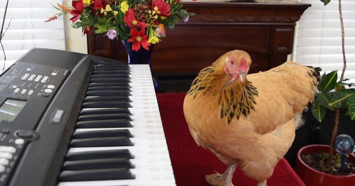 cute-chick-piano.jpg