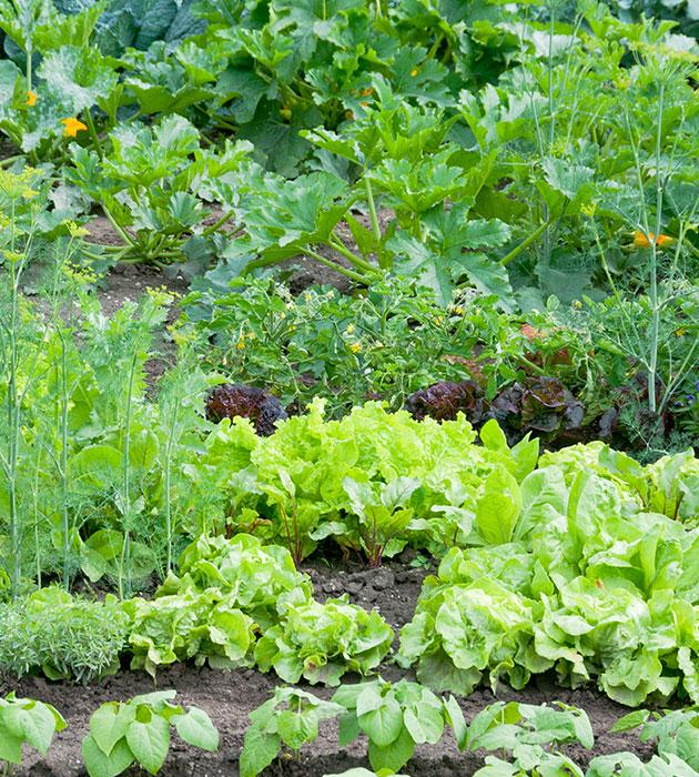 veggie-garden.jpg