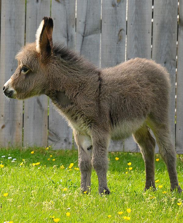 cute-donkey.jpg