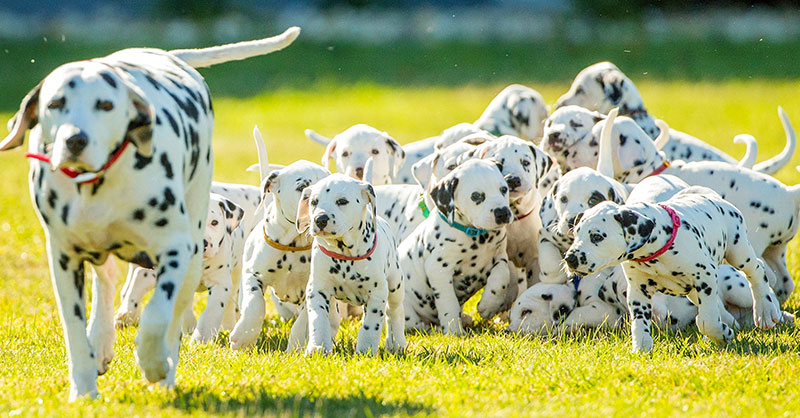 It May Not Be 101 Dalmatians But This Mama Just Smashed The World