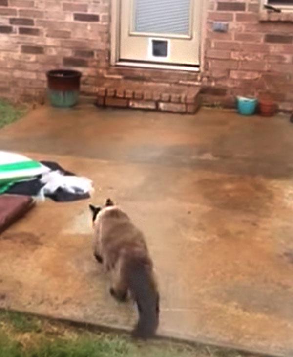 cute-cat-going-towards-door.jpg