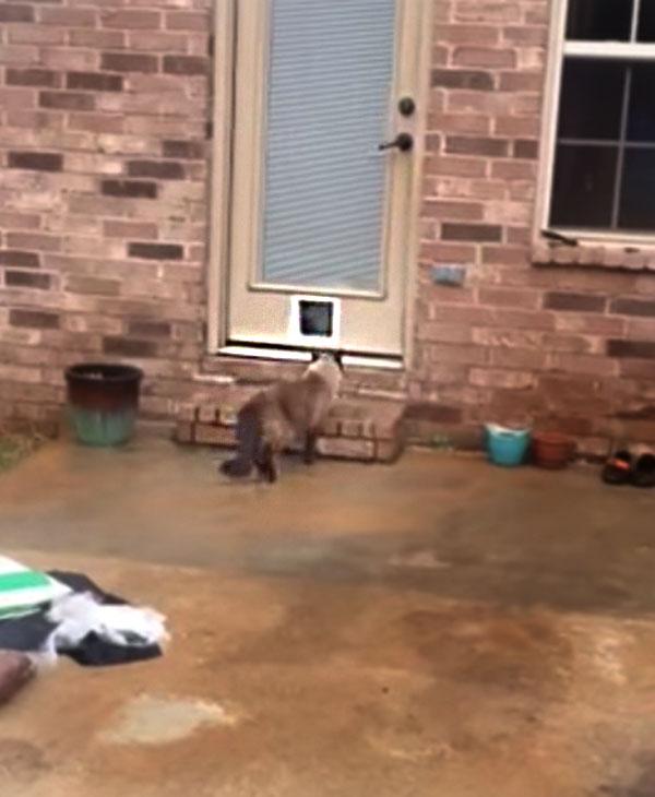 cute-cat-with-new-door.jpg