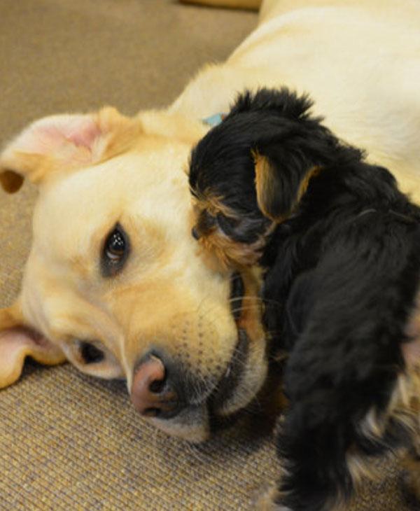 cute-saved-puppy-with-friend.jpg