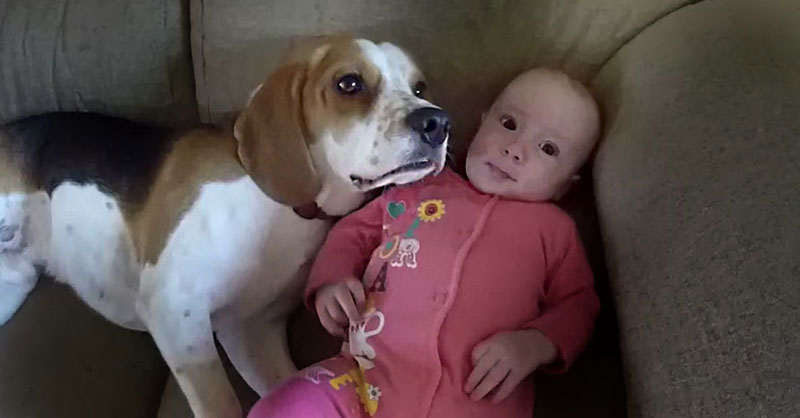 cute-beagle-with-baby-sister-THUMB.jpg