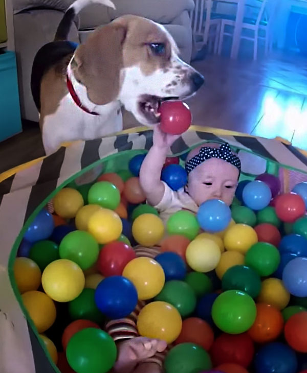 cute-dog-and-sister-in-ball-pit.jpg