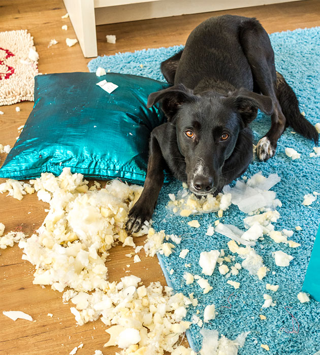 dog-chewed-pillow.jpg