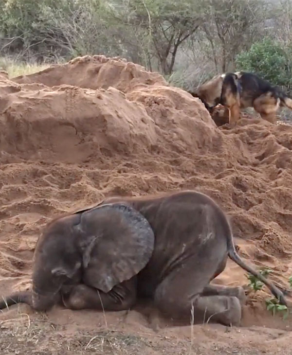 cute-dog-elephant.jpg