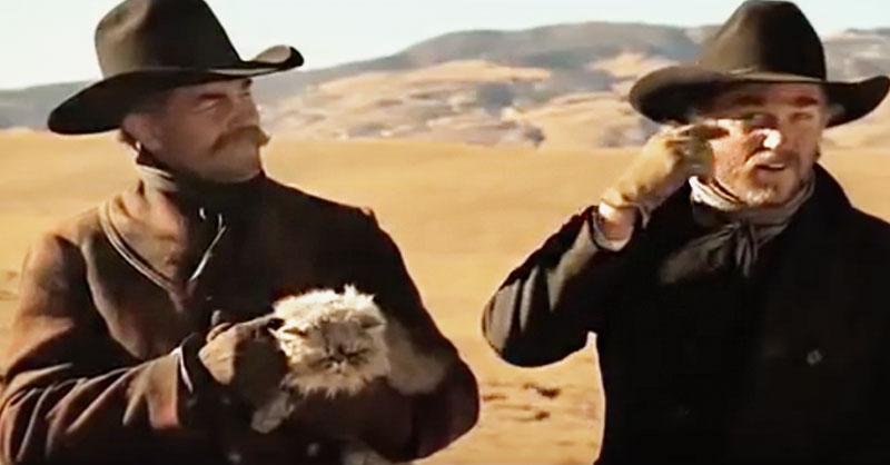 funny-commercial-cats-cowboys-THUMB.jpg