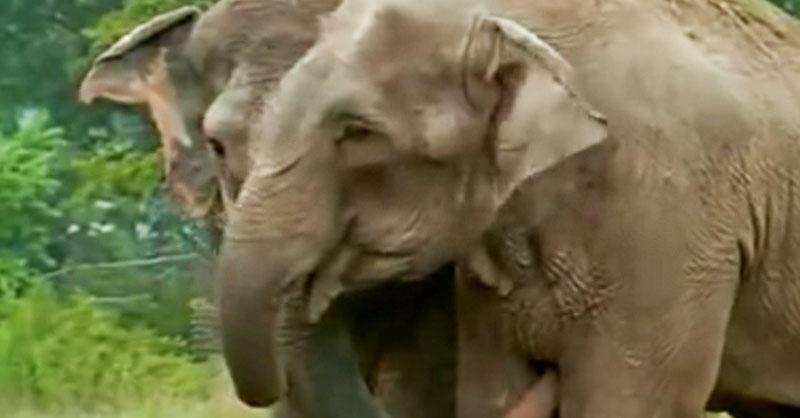 cute-happy-elephant-thumb.jpg