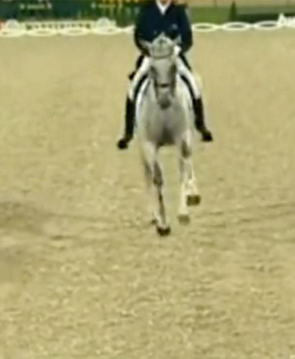 cute-dressage-horse-dance.jpg