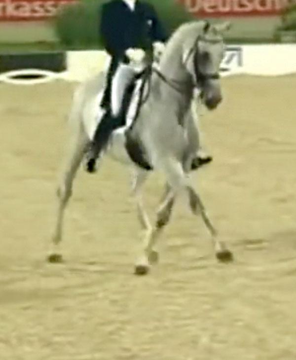 Cute-Horse-Dancing.jpg