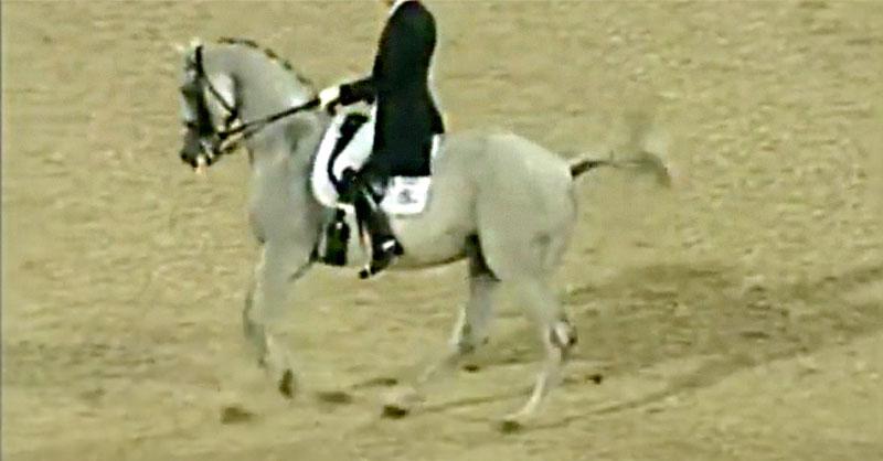 cute-horse-dressage-thumb.jpg