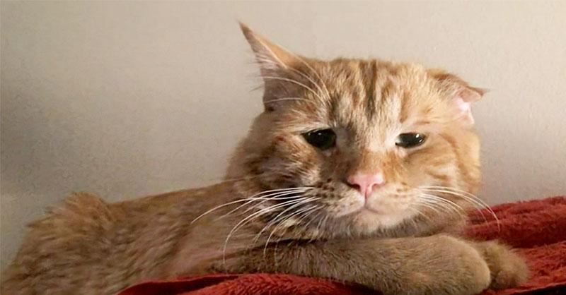 Cute-cat-rescue-thumb.jpg