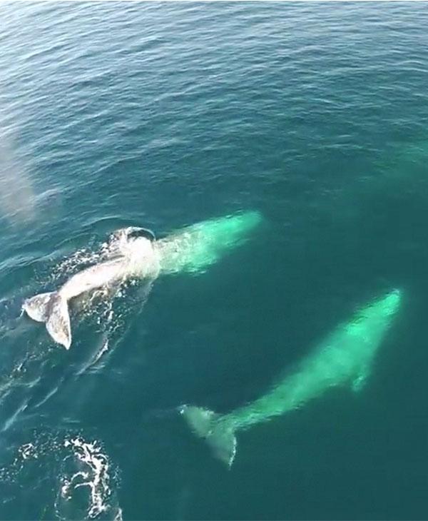 cute-whales-ocean.jpg