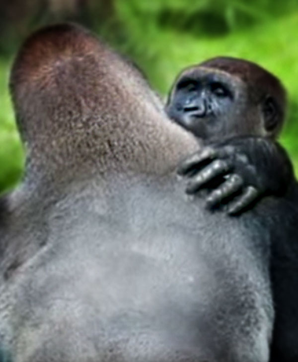 cute-gorilla.brothers-over-shoulder.jpg