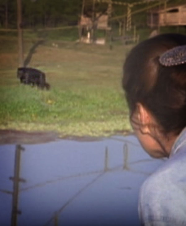 cute-chimp-far-off.jpg