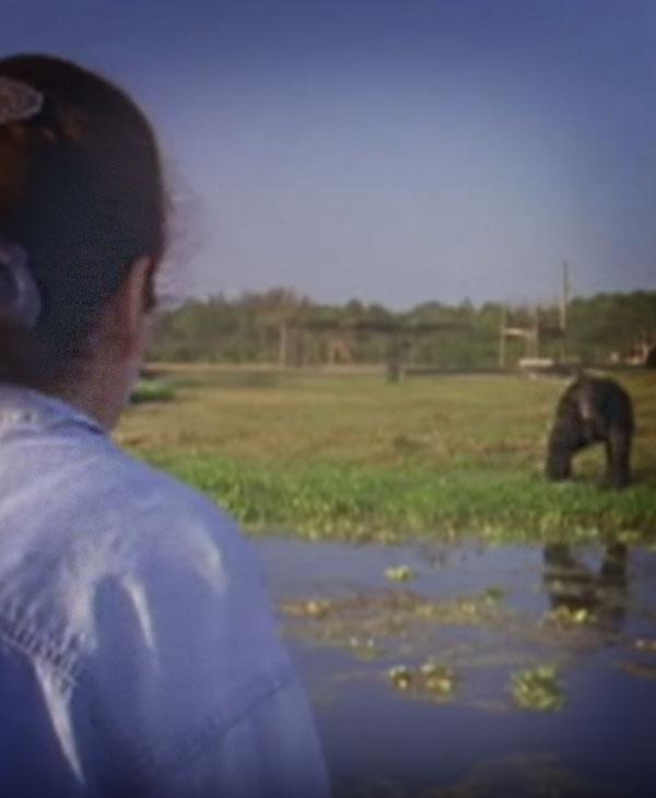 cute-chimp-over-shoulder.jpg