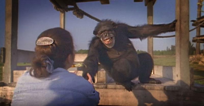 cute-chimp-renunion-THUMB.jpg