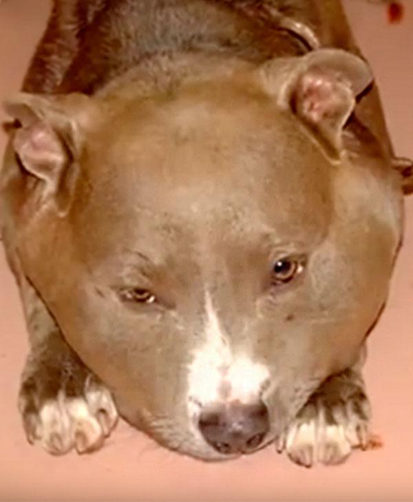 cute-rescued-happy-dog.jpg