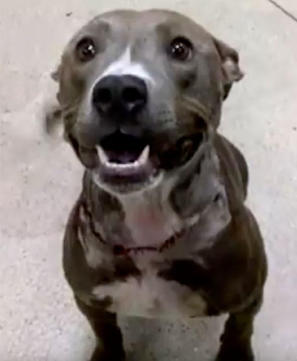 cute-dog-rescued-happy.jpg